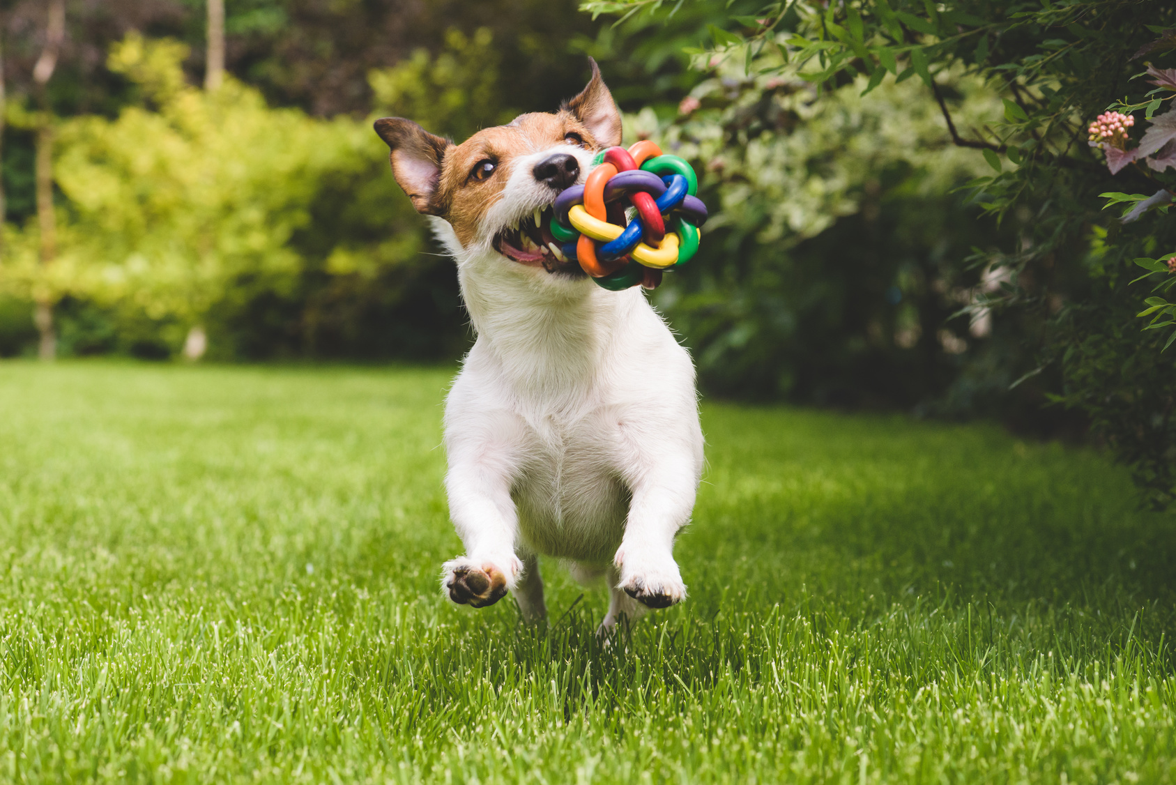 How To Get A Dog To Play With Toys